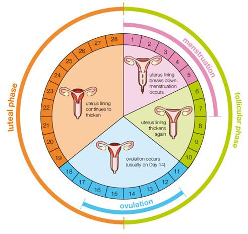 menstrual-chart.blogspot.com_